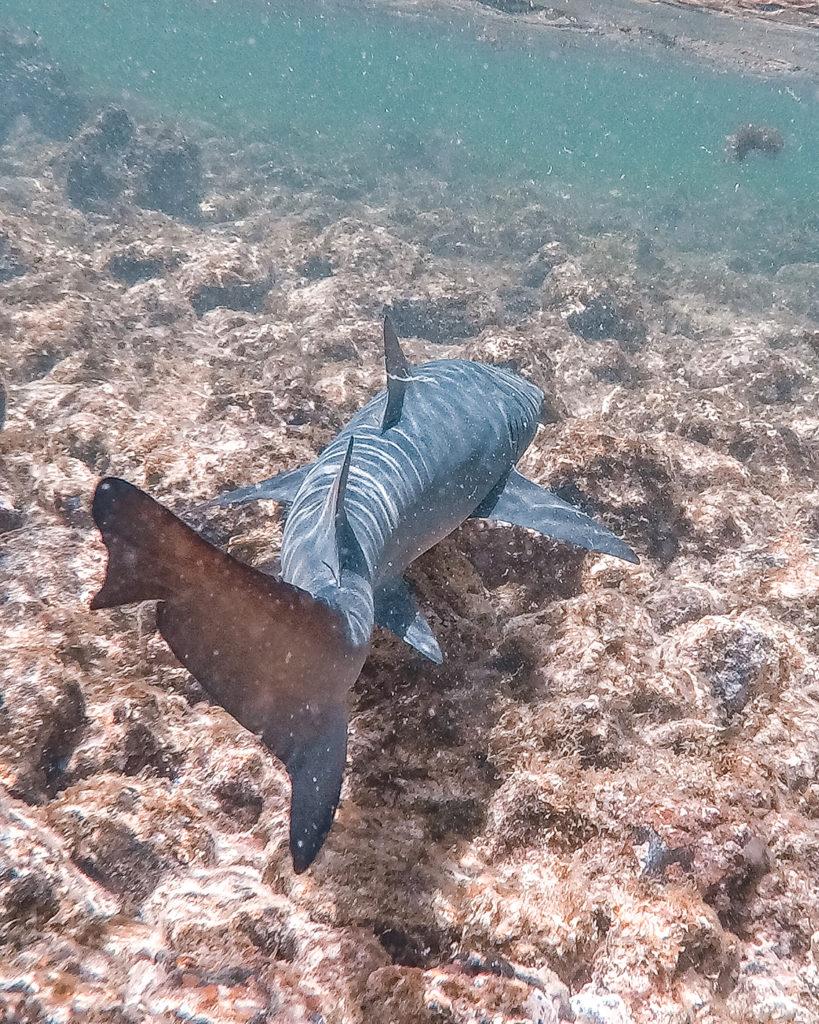 90b-819x1024 10 cose da fare e vedere a Capo Verde - Isola di Sal