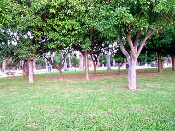 51 Il Giardino degli Aranci - The Garden of Oranges