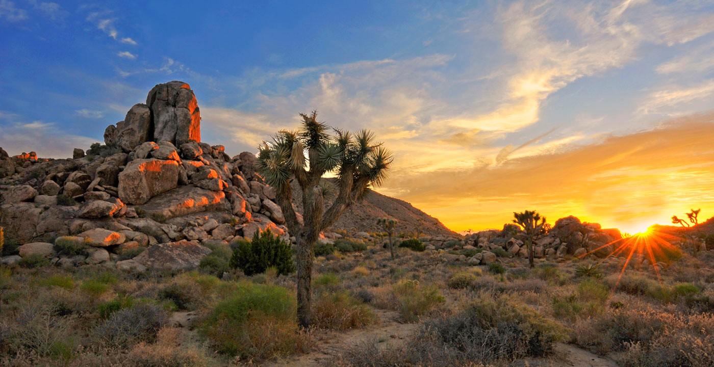1400-joshua-tree-national-park-california-sunrise.imgcache.rev1389236154992.web_.1400.720 #CaliforniaDreamBig.