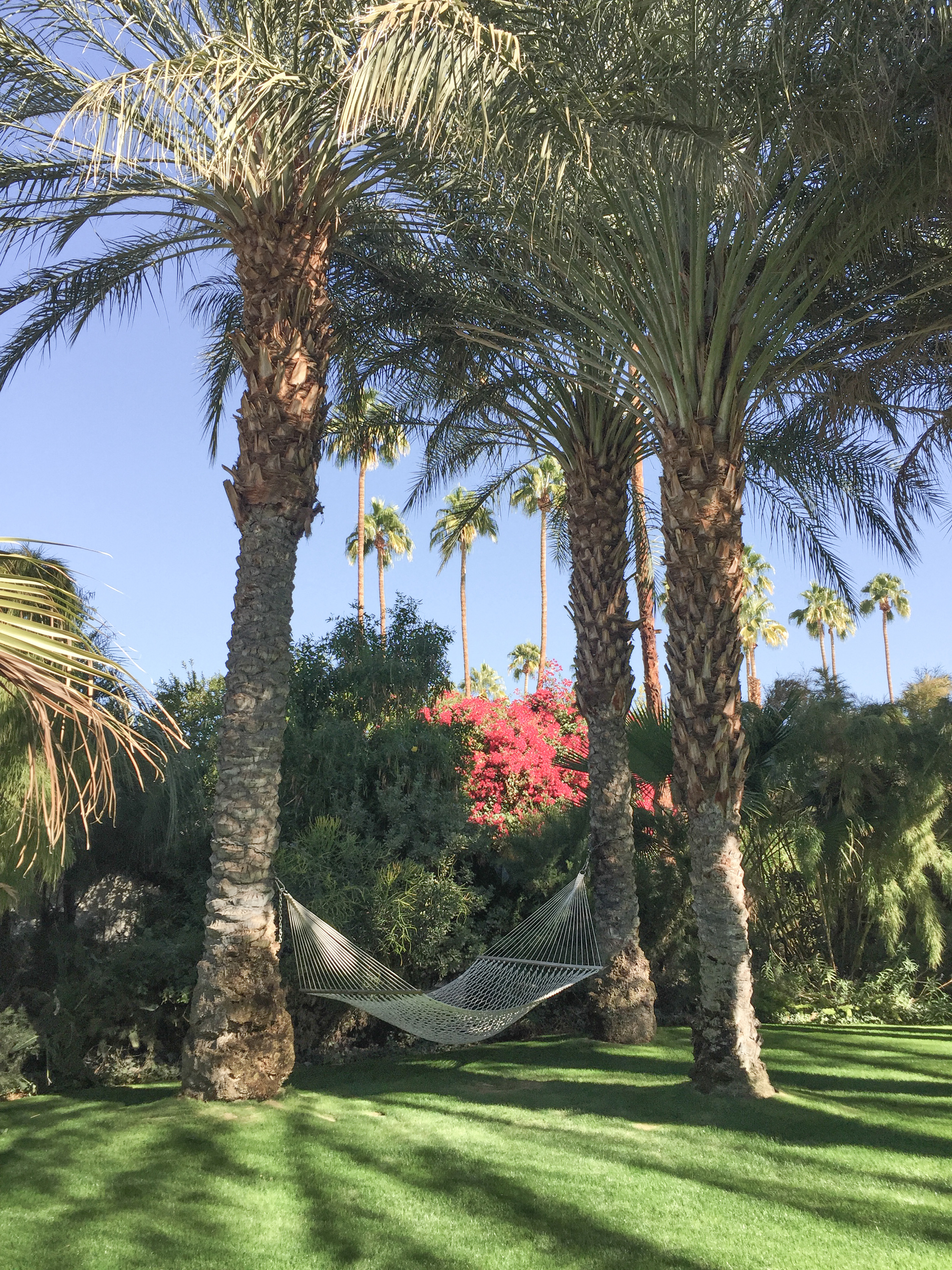 5 #CaliforniaDreamBig: Palm Springs travel tips.