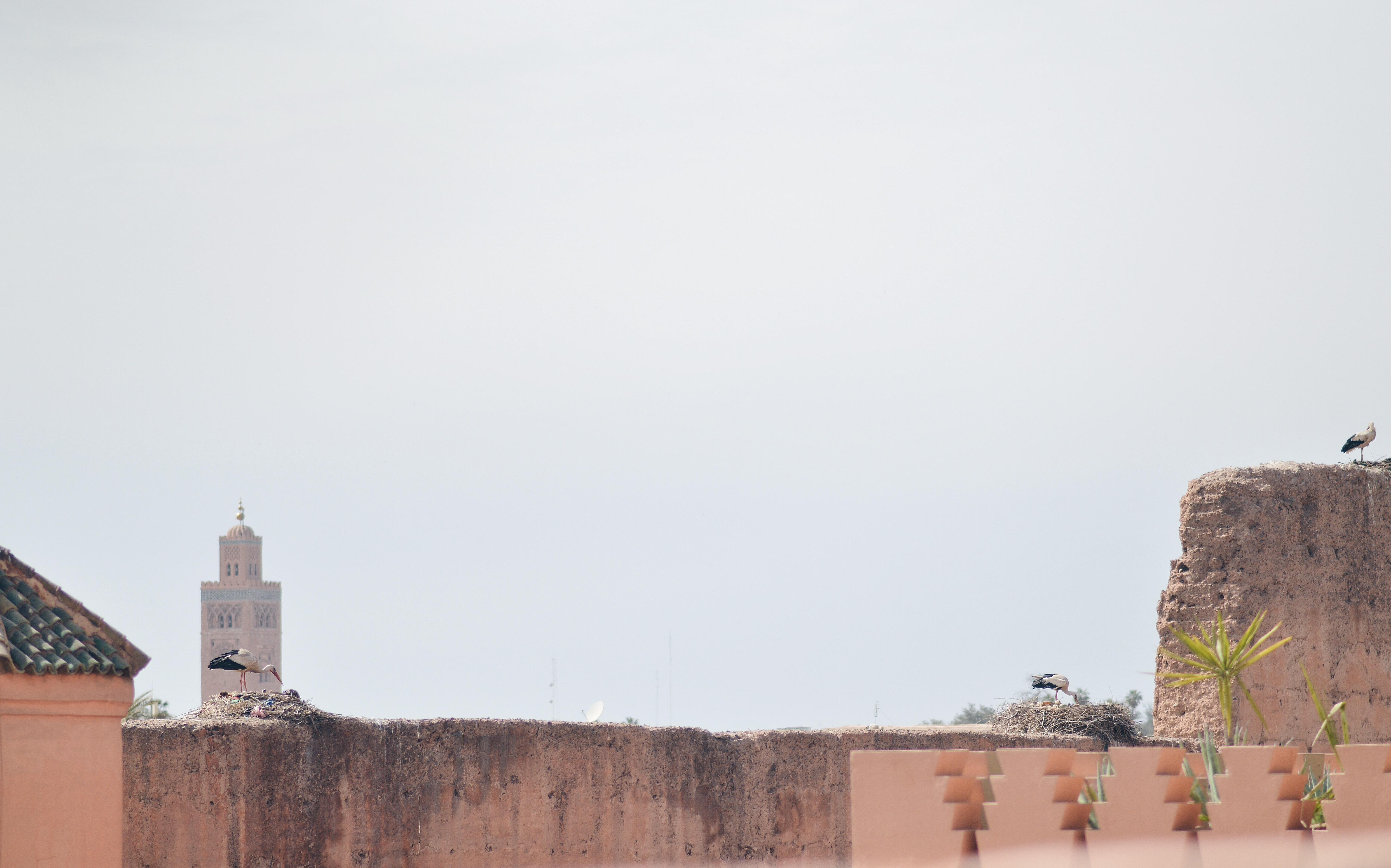 IMG_5378 Marrakech travel tips. Dar Les Cigognes.