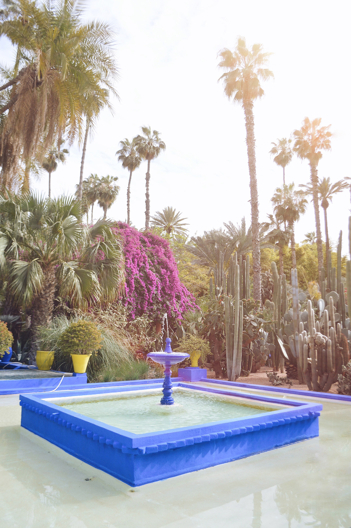 6 Jardin Majorelle - a magical place in Marrakech.