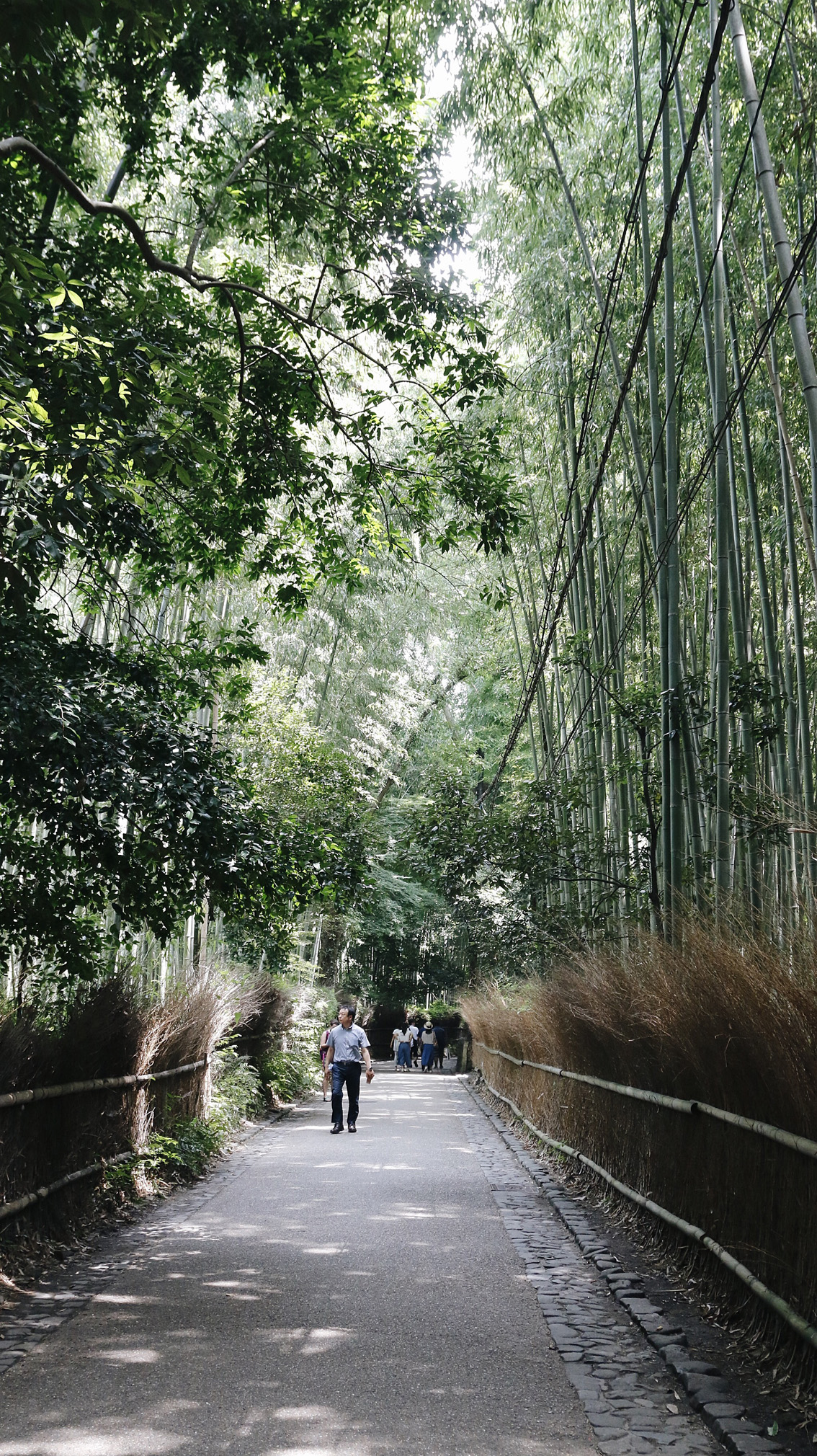 27-1 #Giappotour 4, a magical place : the Bamboo Forest in Arashiyama.