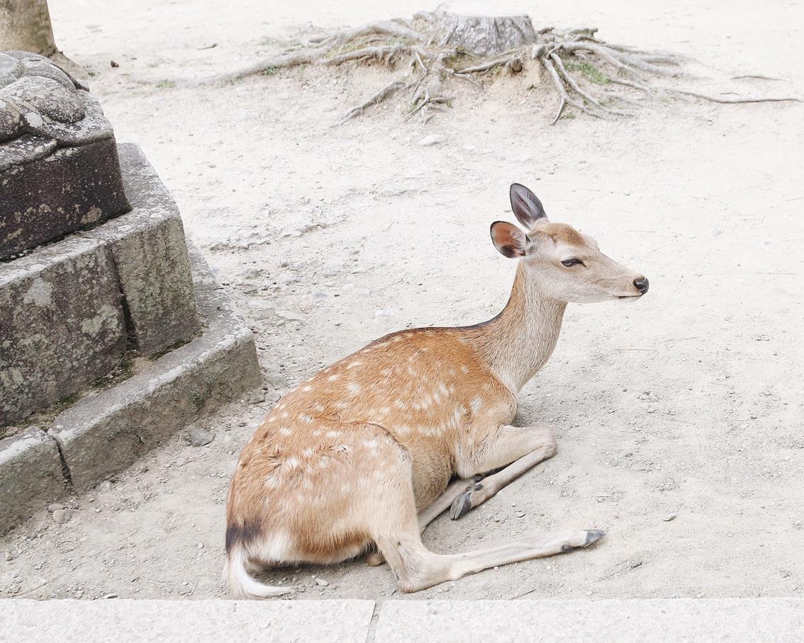 4 #Giappotour with Blueberry Travel day 2: Fushimi Inari & Nara.