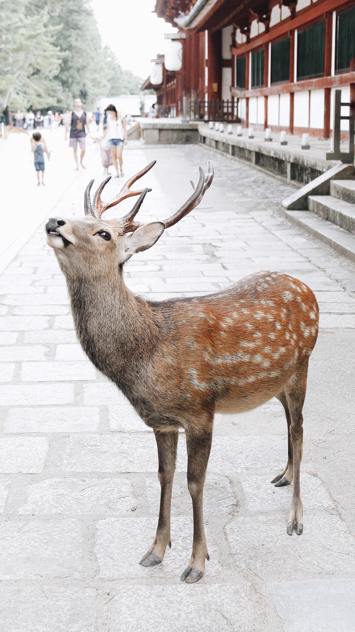 8 #Giappotour with Blueberry Travel day 2: Fushimi Inari & Nara.