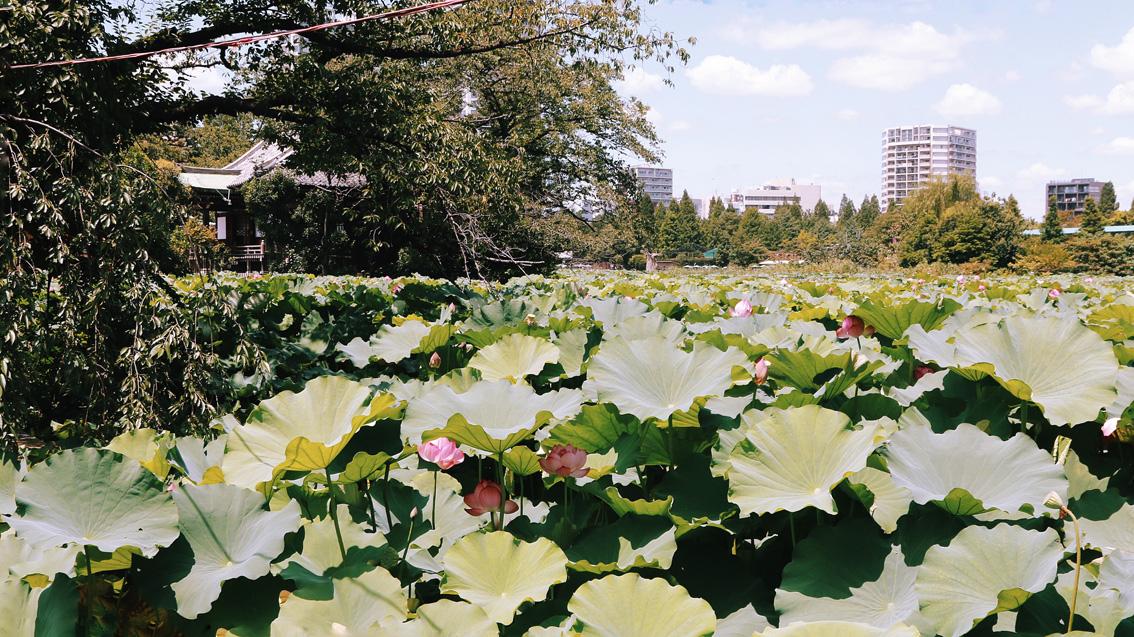 1-1 Giappotour: last day in Tokyo. Ueno, Ginza, Akihabara and Roppongi Hills.