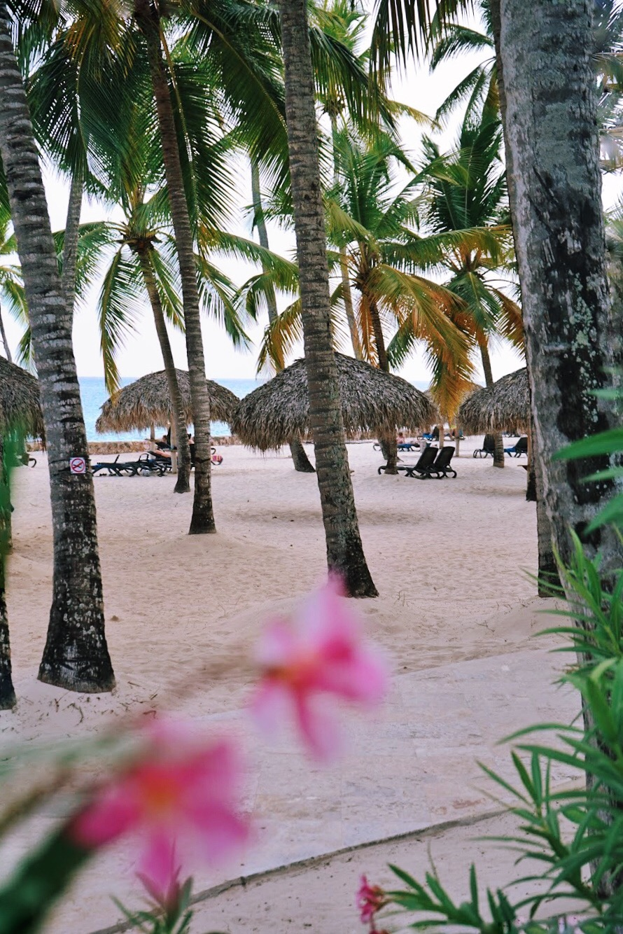 A629D279-AD45-4F09-89A4-2C4CC36174BC Viva Dominicus Beach, my Caribbean experience. How can heaven be more beautiful?