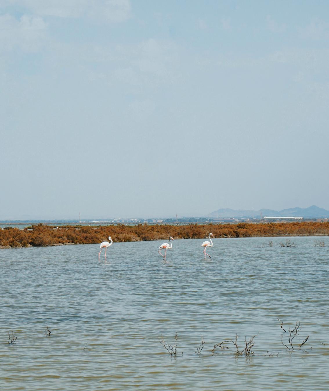 8 2 days in Cagliari ( Sardinia ), where to sleep to discover the best beaches.