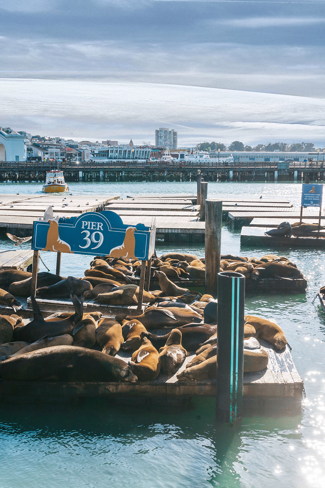 31 10 most instagrammable places in San Francisco you don't have to miss!