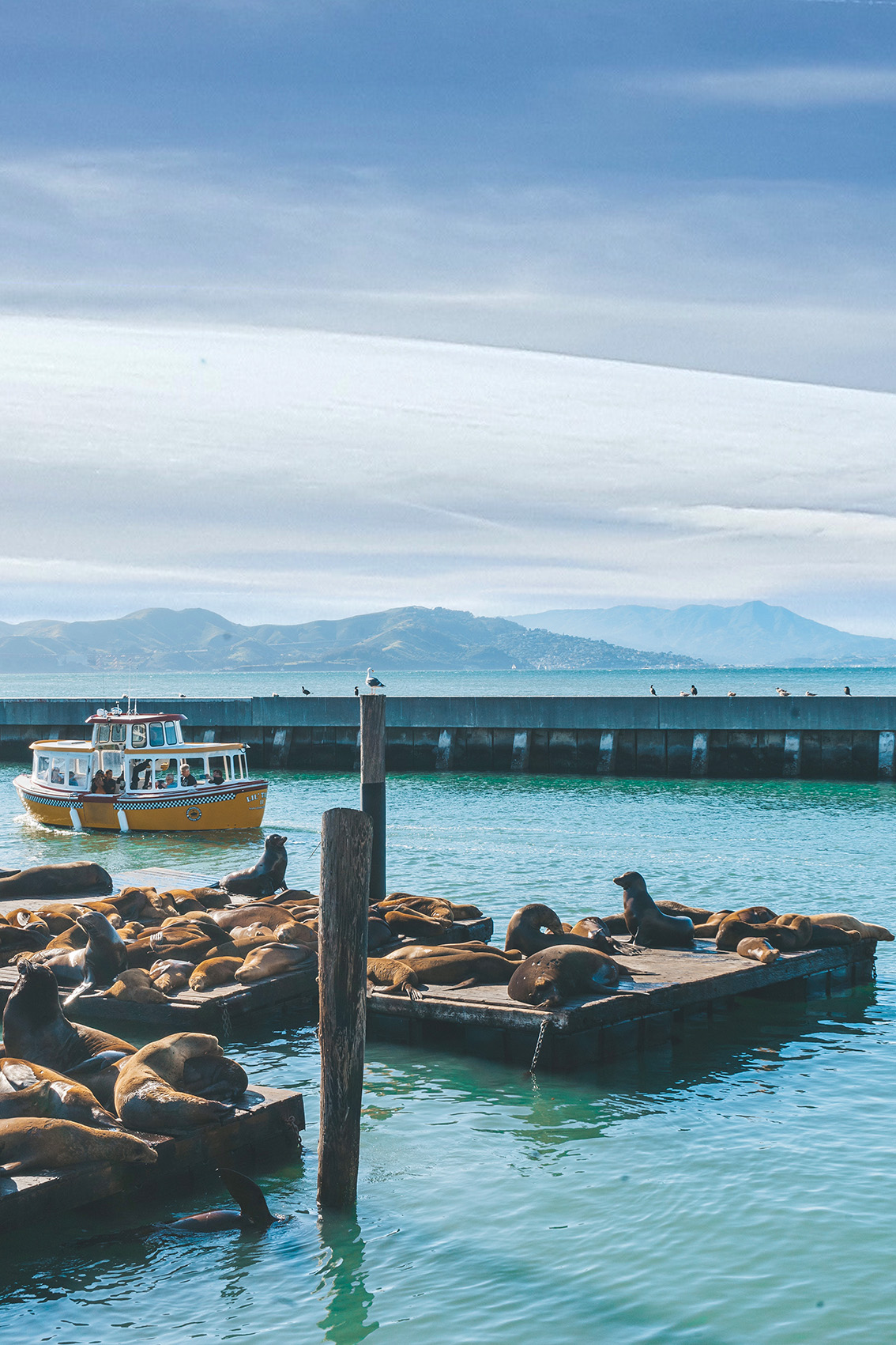 51 10 most instagrammable places in San Francisco you don't have to miss!