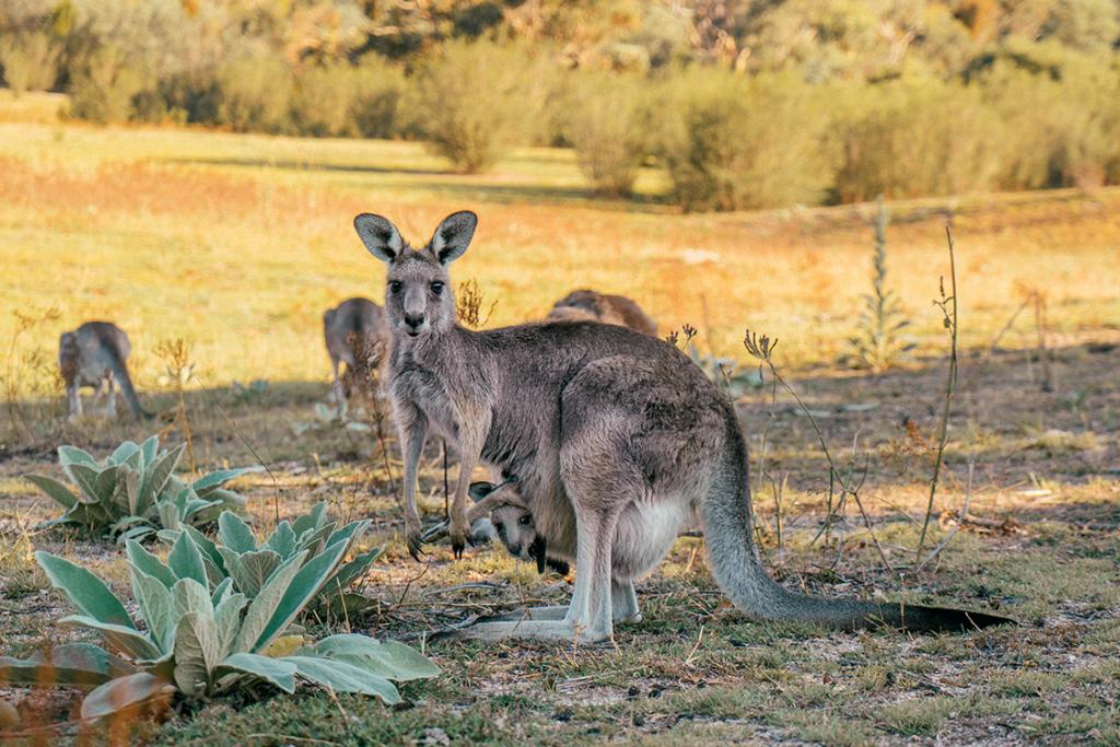 2-1-1024x683 Canberra: la città delle possibilità. Cosa fare e vedere nella Capitale dell'Australia.