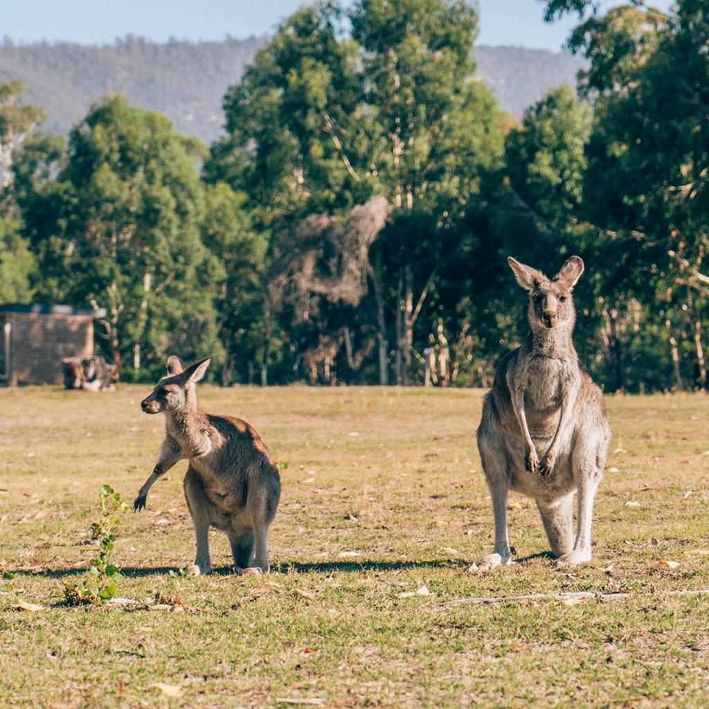4-1024x1024 Canberra: la città delle possibilità. Cosa fare e vedere nella Capitale dell'Australia.