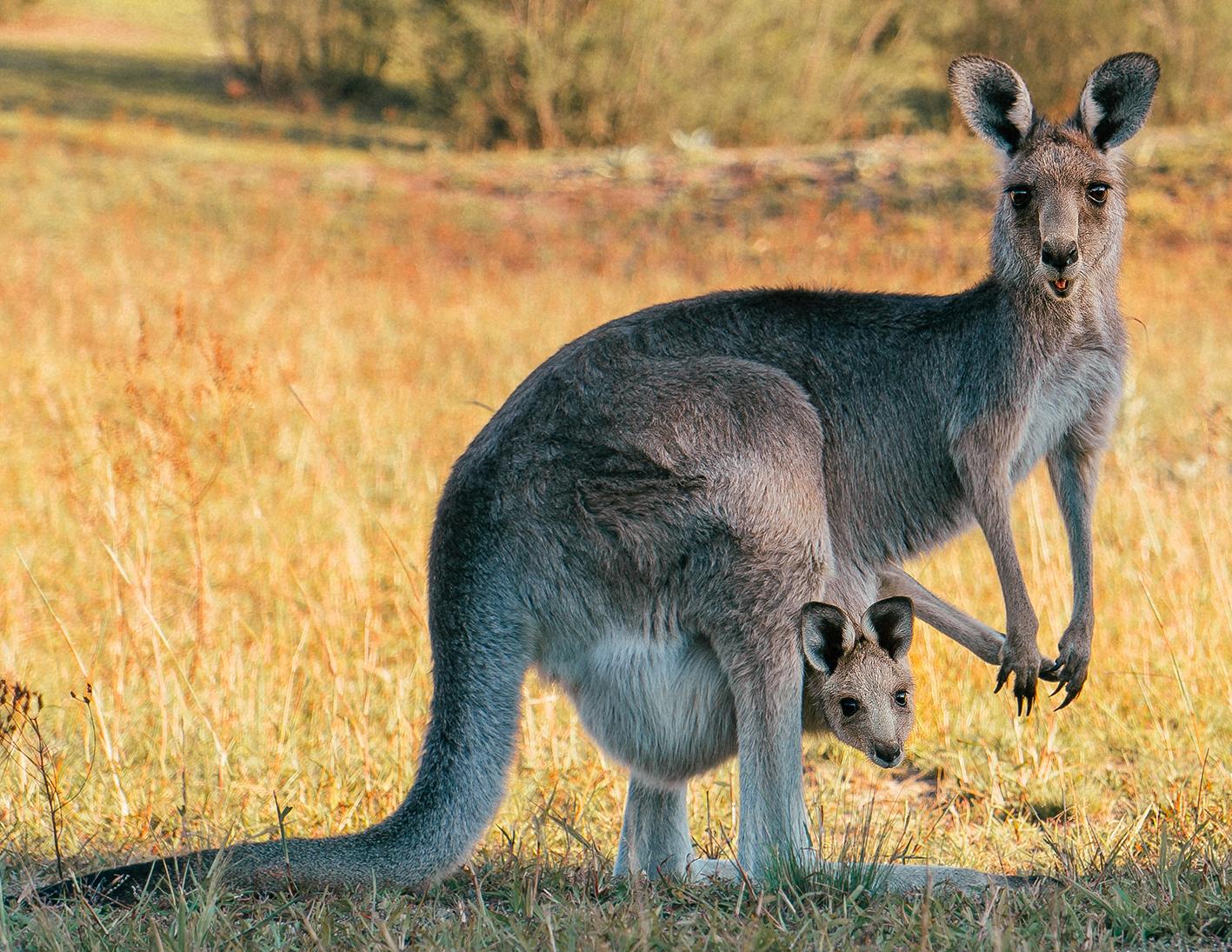 Canberra, la città delle possibilità. Cosa fare e vedere nella Capitale dell'Australia.
