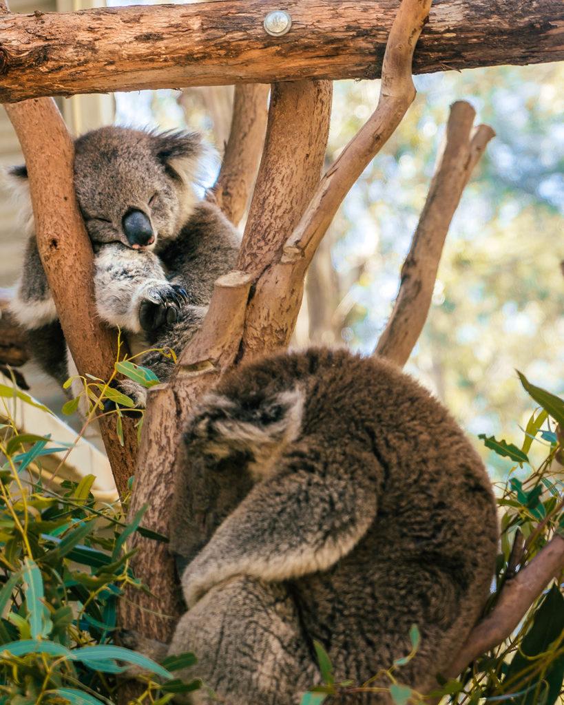 k2-819x1024 Canberra: la città delle possibilità. Cosa fare e vedere nella Capitale dell'Australia.