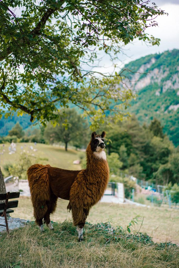 tt13-683x1024 Vacanze in Trentino: le attività imperdibili da provare per nutrire i sensi e l'anima in Paganella.